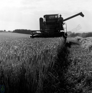 Harvesting, Settrington